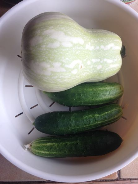 Овощи с балкона