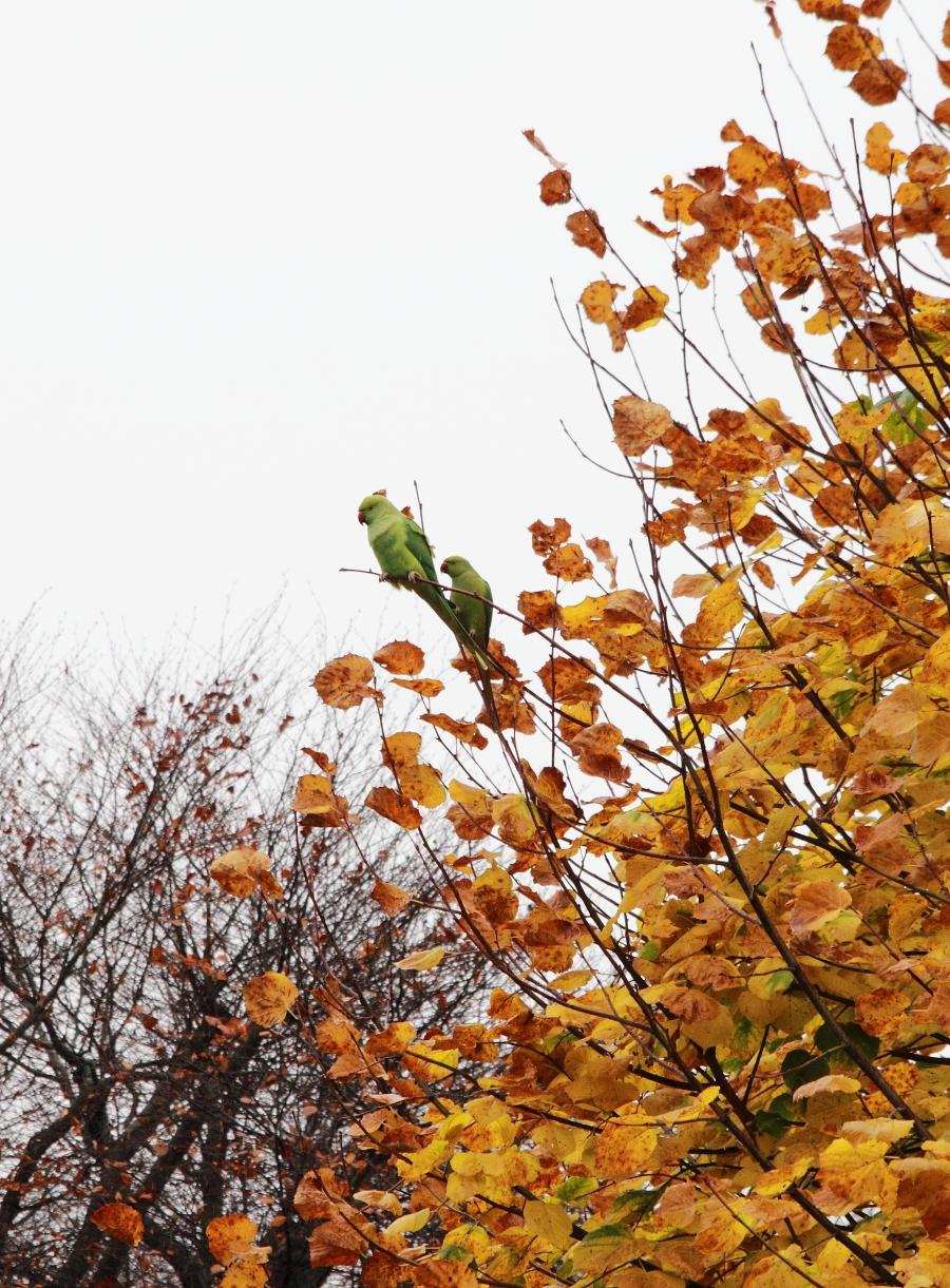 Попугаи в саду 3.JPG